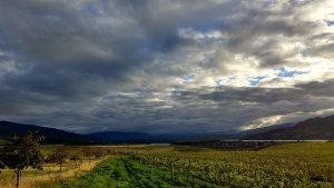 Moody weather over vines