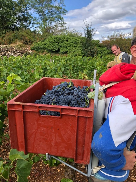 Vendanges at les Evocelles 2020