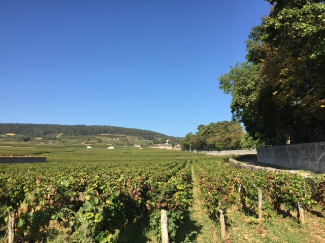 Casse-croute Among the Vines
